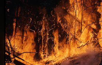 Fire!-1277.jpg