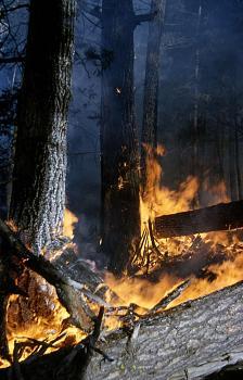 Fire!-1280.jpg