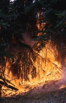 Fire!-1281.jpg