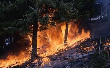 Fire!-1283.jpg