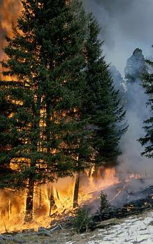 Fire!-1284.jpg