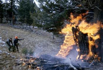 Fire!-17480.jpg