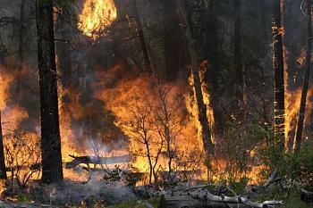 Fire!-2007prescribed3rd.jpg