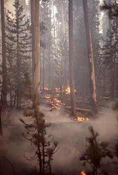 Fire!-12049.jpg