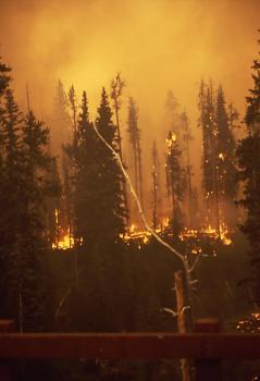 Fire!-12058.jpg