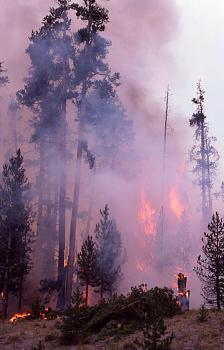 Fire!-12061.jpg