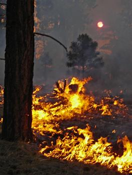 Fire!-rk-warm-dsc00646.jpg
