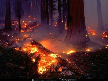 Fire!-nationalgeographic-5-.jpg