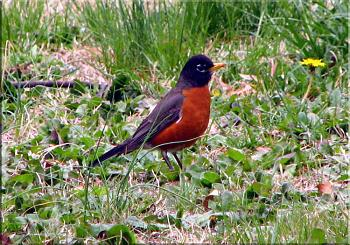 """How about your """"bird"""" photos.....here's a few of mine.-roys-bigburger-kevin-13-.jpg"""