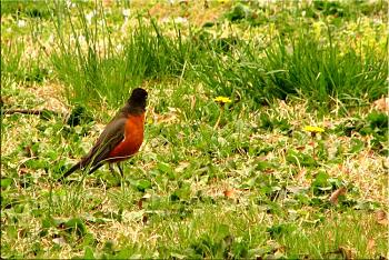 """How about your """"bird"""" photos.....here's a few of mine.-roys-bigburger-kevin-15-.jpg"""