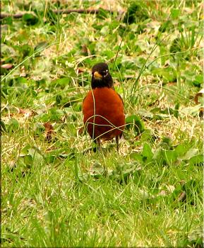 """How about your """"bird"""" photos.....here's a few of mine.-roys-bigburger-kevin-17-.jpg"""