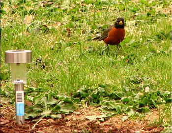 """How about your """"bird"""" photos.....here's a few of mine.-roys-bigburger-kevin-19-.jpg"""