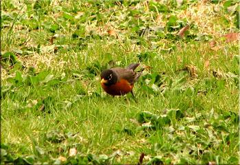 """How about your """"bird"""" photos.....here's a few of mine.-roys-bigburger-kevin-25-.jpg"""