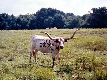 My neighbor is a FAT COW!!!-img_0257_edited-2-.jpg