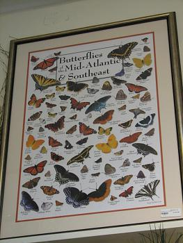"""Lets look at some """"butterflies"""" and other insects-img_6845.jpg"""