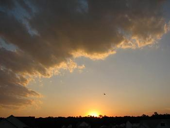 Sunset and sunrise photography-fly-flying-into-sunset.jpg