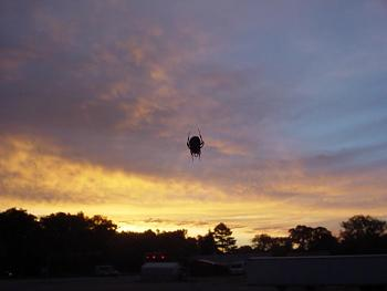 Sunset and sunrise photography-sunrise-spider.jpg