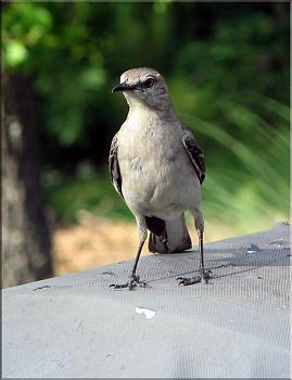"""How about your """"bird"""" photos.....here's a few of mine.-img_5624-copy.jpg"""