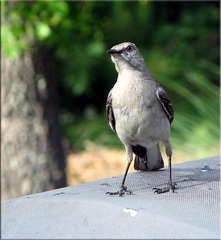 """How about your """"bird"""" photos.....here's a few of mine.-img_5625-copy.jpg"""