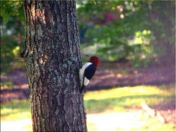 """How about your """"bird"""" photos.....here's a few of mine.-img_4526-copy.jpg"""