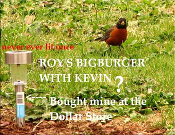 "How about your ""bird"" photos.....here's a few of mine.-roys-bigburger-kevin-19-.jpg"