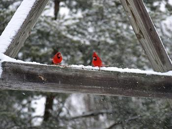 "How about your ""bird"" photos.....here's a few of mine.-p308.jpg"