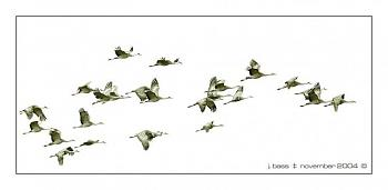 "How about your ""bird"" photos.....here's a few of mine.-cranes-pixley-1737bwrg2-tig.jpg"