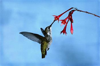 "How about your ""bird"" photos.....here's a few of mine.-animals-action-92-.jpg"