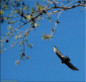 """How about your """"bird"""" photos.....here's a few of mine.-img_0193-copy.jpg"""
