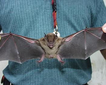 "How about your ""bird"" photos.....here's a few of mine.-fruit-bat1.jpg"