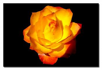 "Everybody loves ""flowers"" and ""trees""......let's share-add yours!-orange-rose.jpg"