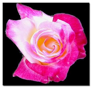 """Everybody loves """"flowers"""" and """"trees""""......let's share-add yours!-rose-bud-growing-up-copy.jpg"""