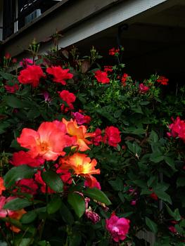 """Everybody loves """"flowers"""" and """"trees""""......let's share-add yours!-p1010610.jpg"""
