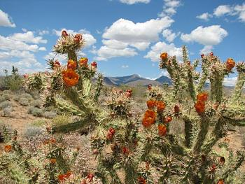 "Everybody loves ""flowers"" and ""trees""......let's share-add yours!-alamo-lake-trip-050.jpg"