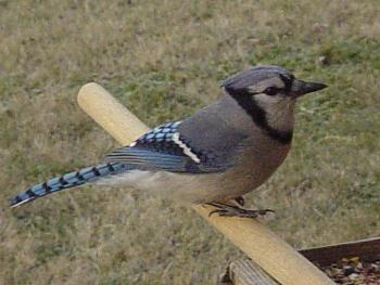"""How about your """"bird"""" photos.....here's a few of mine.-dsc09489.jpg"""