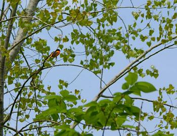 """How about your """"bird"""" photos.....here's a few of mine.-dsc01525.jpg"""