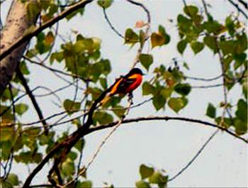 """How about your """"bird"""" photos.....here's a few of mine.-dsc01525-copy.jpg"""