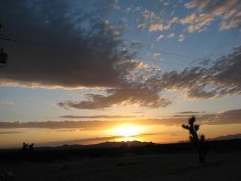 Sunset and sunrise photography-flower-sunset-023.jpg