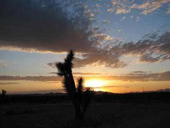 Sunset and sunrise photography-flower-sunset-024.jpg