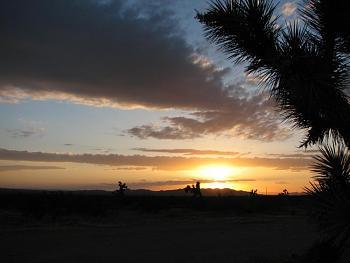 Sunset and sunrise photography-flower-sunset-030.jpg