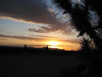 Sunset and sunrise photography-flower-sunset-029.jpg