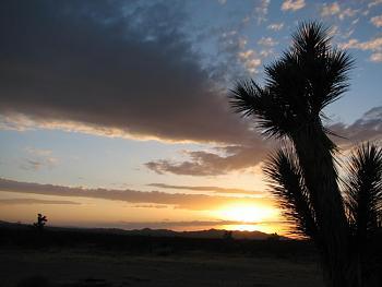 Sunset and sunrise photography-flower-sunset-027.jpg