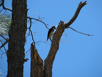 """How about your """"bird"""" photos.....here's a few of mine.-hualapai-cabin-2011-279.jpg"""