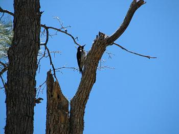 """How about your """"bird"""" photos.....here's a few of mine.-hualapai-cabin-2011-282.jpg"""