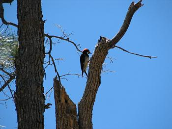 """How about your """"bird"""" photos.....here's a few of mine.-hualapai-cabin-2011-284.jpg"""