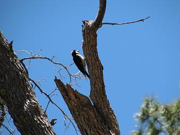 """How about your """"bird"""" photos.....here's a few of mine.-hualapai-cabin-2011-297.jpg"""