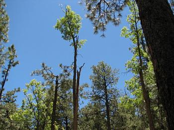"""How about your """"bird"""" photos.....here's a few of mine.-hualapai-cabin-2011-285.jpg"""