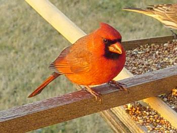"""How about your """"bird"""" photos.....here's a few of mine.-dsc09518.jpg"""