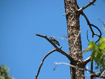 """How about your """"bird"""" photos.....here's a few of mine.-hualapai-cabin-2011-303.jpg"""
