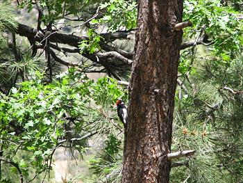 """How about your """"bird"""" photos.....here's a few of mine.-hualapai-cabin-2011-305.jpg"""